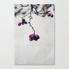 Bacche Canvas Print