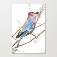 Lilac breasted roller Canvas Print