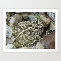 toad 2016 Art Print