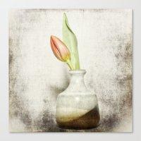 Single Tulip Still Life Canvas Print