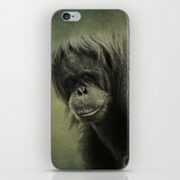 Orangutan  iPhone & iPod Skin