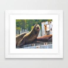 Sea Lion Framed Art Print