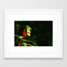 Play of light Framed Art Print