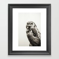 Snowy Owl   Fig. 02 Framed Art Print
