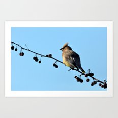 Waxwing on a Winter's Day Art Print