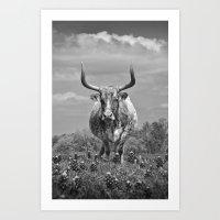 Old Texas Longhorn in Field of Bluebonnets Art Print