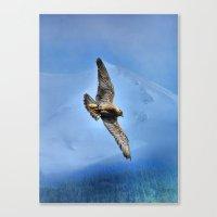Peregrin Falcon Soaring Canvas Print