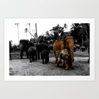 Pinnawala Art Print