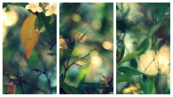 Daydream Believer - Triptych Art Print