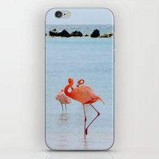 A Flamboyance of Flamingos iPhone & iPod Skin