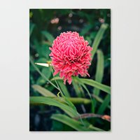 Tropical Flower: Thailand Canvas Print