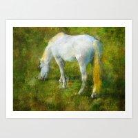 Camargue Horse Art Print