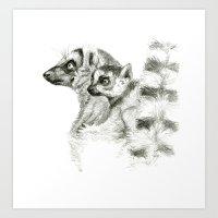 Maki catta and cub Art Print