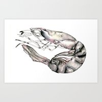 Planetary Shrimp Art Print