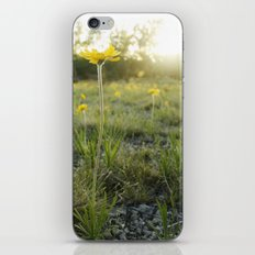 Lakeside Daisy iPhone & iPod Skin