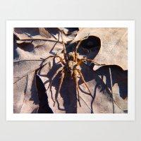 Spider 2011 Art Print
