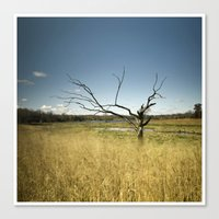 The Witches Tree Canvas Print