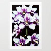 Orchiiiiiiiids. Art Print