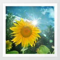 Sunflower. Vintage Art Print