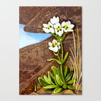 High Country Gentian Flo… Canvas Print