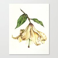 Botanical Art - White Lily Canvas Print