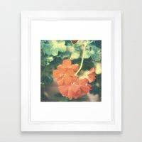 Red Begonia Framed Art Print