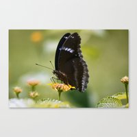 Butterfly (1) Canvas Print