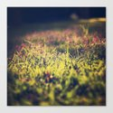 Little violet flowers on the meadow (Vintage and Retro nature Photography) Canvas Print