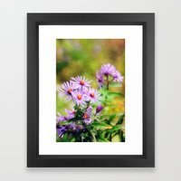 Purple Aster Framed Art Print