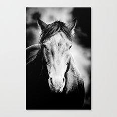 Wild Stallion Canvas Print