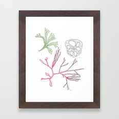 Seaweed and Lotus Root Framed Art Print