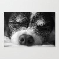 Rufio Sleeping Canvas Print