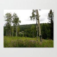 Spring in WaterValley Canvas Print