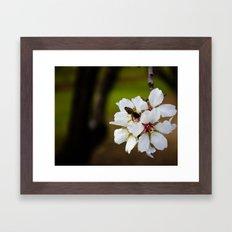 Spring Bee Framed Art Print