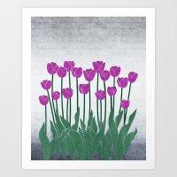 Magenta Tulips Art Print