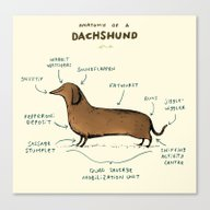 Anatomy Of A Dachshund Canvas Print