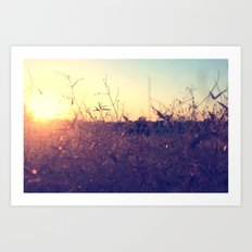 Evening in Summer Art Print