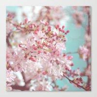 Pink Cherry Blossom Canvas Print