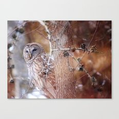 Owl :: In the Pines Canvas Print