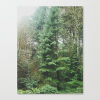 With the Trees Canvas Print