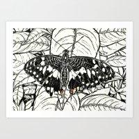 Chequered Swallowtail Art Print