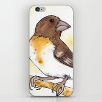Yellow Rose-breasted Gro… iPhone & iPod Skin
