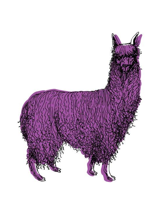 suri alpaca Art Print