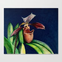 Magnificent Orchid  Canvas Print
