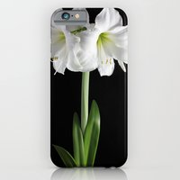 White Amaryllis iPhone 6 Slim Case