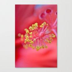 inside-hibiscus  Canvas Print