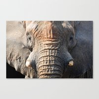 African Elephant 1 Canvas Print
