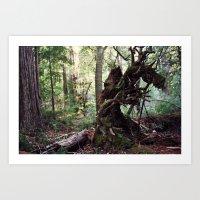 forest decomposition Art Print