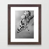 Flutter IV Framed Art Print