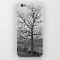 iPhone & iPod Skin featuring Tree by lokiandmephotography